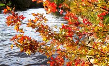 Free Autumn, Leaf, Tree, Water Stock Image - 111642591