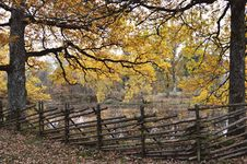 Free Nature, Tree, Autumn, Woodland Stock Photos - 111642643