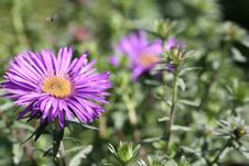 Free Flower, Plant, Aster, Flora Royalty Free Stock Photos - 111642648