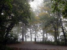 Free Tree, Nature, Woodland, Leaf Royalty Free Stock Photography - 111642657
