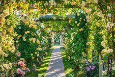 Free Flower, Flowering Plant, Garden, Plant Stock Image - 111642791