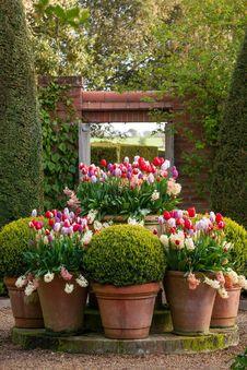 Free Flower, Plant, Flowering Plant, Garden Stock Photo - 111643130