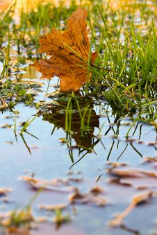 Free Leaf, Water, Autumn, Reflection Stock Photography - 111643212
