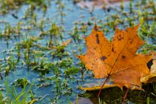 Free Leaf, Vegetation, Autumn, Water Stock Image - 111643261