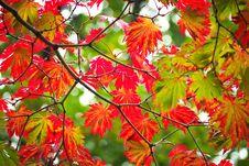 Free Autumn, Leaf, Maple Leaf, Flora Royalty Free Stock Photos - 111643308