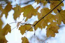 Free Leaf, Autumn, Tree, Maple Leaf Royalty Free Stock Images - 111643329