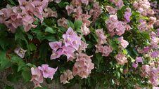Free Flower, Plant, Flora, Shrub Stock Image - 111643361