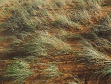 Free Vegetation, Ecosystem, Grass, Grass Family Royalty Free Stock Image - 111643486
