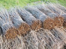 Free Straw, Grass, Hay, Grass Family Royalty Free Stock Photos - 111643548
