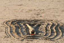 Free Sand, Mudflat, Soil, Ecoregion Royalty Free Stock Image - 111643676