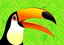 Free Toucan, Beak, Fauna, Bird Royalty Free Stock Images - 111643759