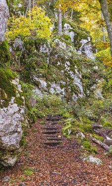 Free Nature, Woodland, Vegetation, Tree Stock Photos - 111643803