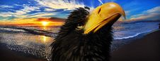 Free Beak, Close Up, Sky, Eagle Royalty Free Stock Photo - 111643825