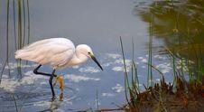 Free Bird, Fauna, Beak, Great Egret Stock Photos - 111643893