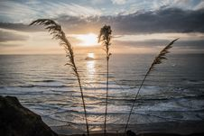 Free Silhouette Photograph Of Grass Beside Seashore Royalty Free Stock Image - 111685616