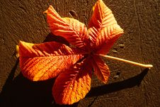 Free Leaf, Orange, Flora, Autumn Royalty Free Stock Image - 111719566