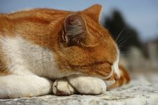 Free Cat, Whiskers, Fauna, Small To Medium Sized Cats Stock Images - 111719584