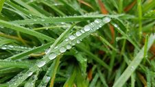 Free Water, Dew, Grass, Moisture Royalty Free Stock Photo - 111719635