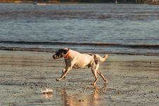 Free Dog, Dog Like Mammal, Water, Sand Stock Photography - 111719642