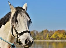 Free Horse, Bridle, Horse Tack, Rein Royalty Free Stock Photo - 111719805