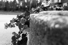 Free Black, Black And White, Monochrome Photography, Tree Stock Photography - 111719852