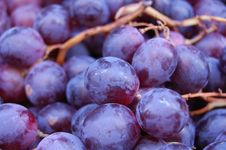 Free Juicy Grapes Macro For Making Wine Royalty Free Stock Image - 11181826