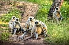 Free Group Of Primates On Ground Stock Photo - 111824050