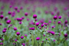 Free Photo Of Purple And Green Flowers Stock Image - 111824051