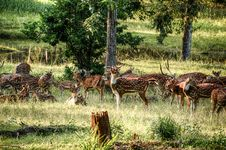 Free Group Of Deer On Green Field At Daytime Stock Photos - 111824053
