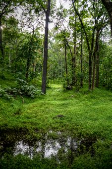Free Green Trees And Grass Stock Image - 111824061