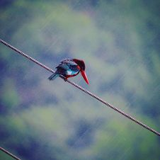 Free Red And Blue Bird On Gray Rope Stock Photos - 111824203