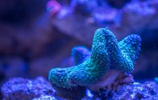 Free Corals Royalty Free Stock Photos - 111894448