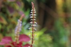Free Selective Focus Photo Of Purple Petaled Flower Stock Photo - 111894460