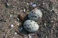 Free Eggs On Sandy Beach Stock Photography - 1129222