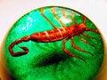 Free Scary Scorpion Dome Stock Photos - 1129663