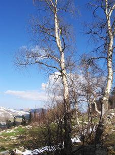 Free Spring Landscape Stock Images - 1120864