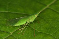 Free Green Bug Royalty Free Stock Image - 1121186