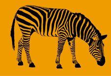 Free Zebra Stock Image - 1123711