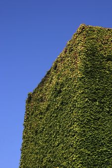 Free Ivy Wall Stock Images - 1124194