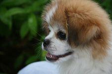 Little Dog Stock Photography