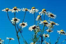 Free Flowers Wild - 2 Stock Image - 1125741