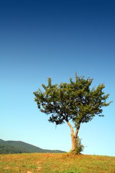 Free Landscape At The Mountain With Alone Tree Stock Photos - 1126903