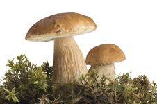 Free Mushroom Stock Image - 1127501