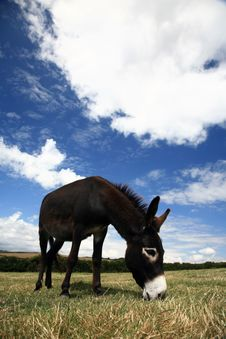 Free Pet Donkey Stock Photo - 1128740