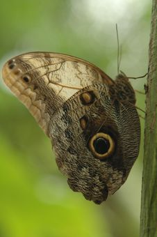 Free Butterfly Stock Photos - 1128913