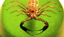Scorpion Dome Royalty Free Stock Photography