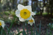 Free Flower, Plant, Flowering Plant, Yellow Stock Image - 112041331