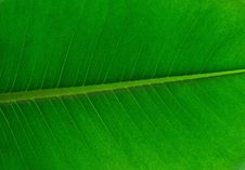 Free Leaf, Green, Banana Leaf, Plant Stock Photography - 112041342