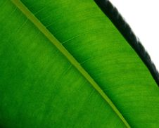 Free Leaf, Green, Plant, Banana Leaf Royalty Free Stock Image - 112041456