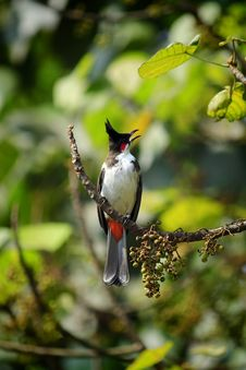 Free Bird, Fauna, Beak, Flora Royalty Free Stock Images - 112041689